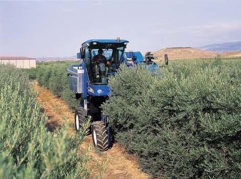 superintensive-olive-harvest