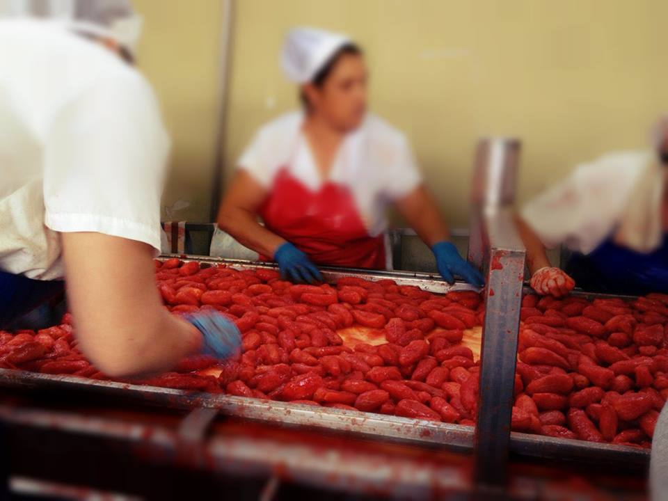 Processing freshly harvested San Marzano Tomatoes