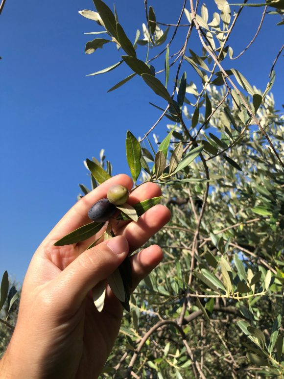 Extra virgin olive oil umbria gustiamo italy's best foods