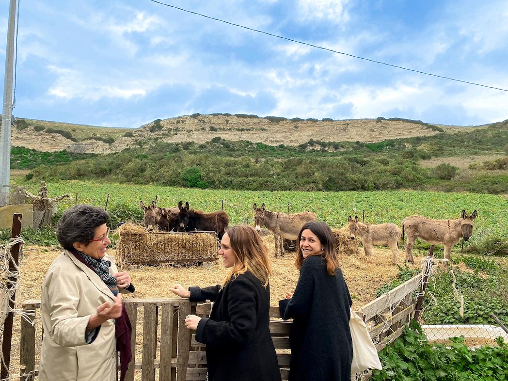 Gustiamo Sardegna Bosana Olives Antichi Uliveti EVOO