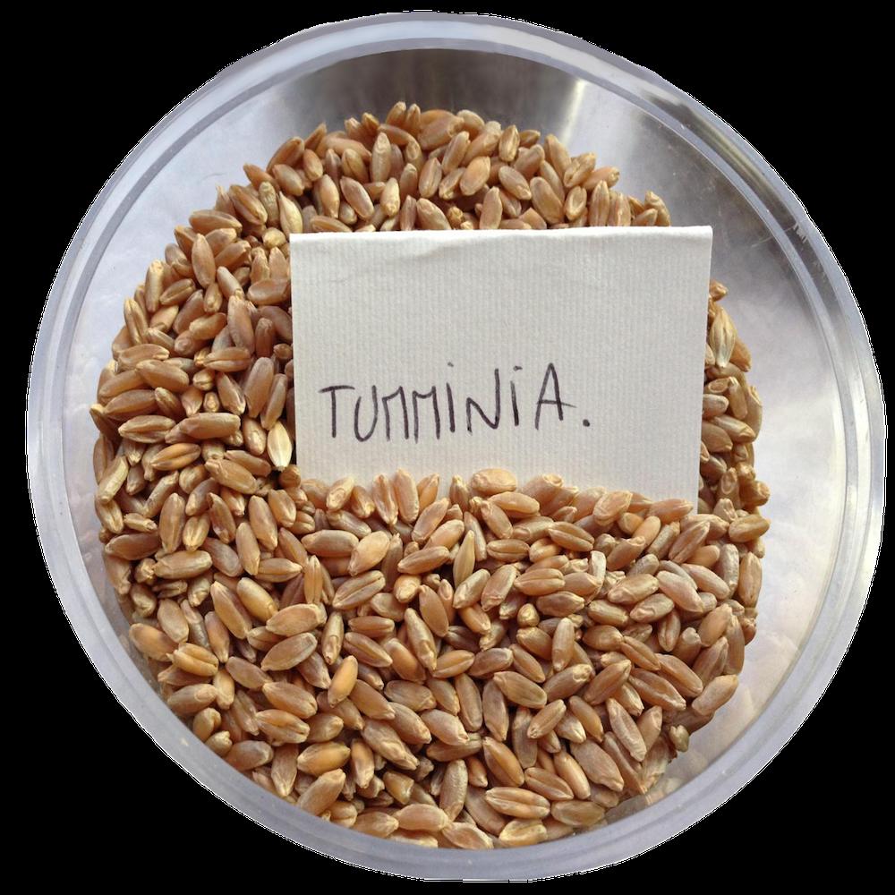 From Sicily, Busiate di Tumminia Gustiamo